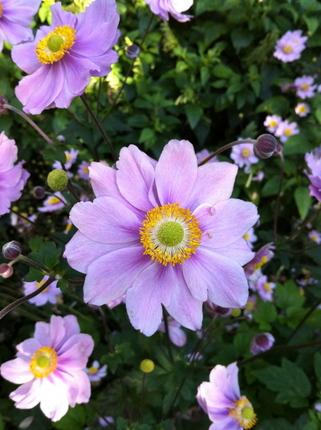 LON FLOWER.JPG